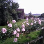 Rose Garden Sussex Retreat