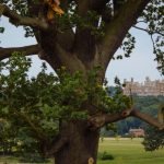 Platinum Healing at Belvoir Castle